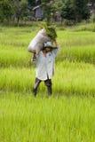 εργασία ρυζιού πεδίων Στοκ Φωτογραφίες