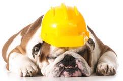 εργασία σκυλιών Στοκ Φωτογραφίες