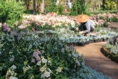 Εργασίες ατόμων κηπουρών θαμπάδων στον τομέα κήπων Στοκ Φωτογραφία