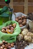 Εργασίες κήπων άνοιξης και καλοκαιριού - φυτεψτε τα θερινά λουλούδια, βολβοί, SE Στοκ Φωτογραφίες