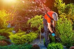 Εργασίες κήπων κηπουρών Στοκ Εικόνες