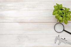 Εργασιακός χώρος γραφείων με πράσινους houseplant, τους παχυμετρικούς διαβήτες και πιό magnifier Στοκ Φωτογραφία