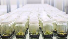 εργαστήριο καλλιεργειών ιστού Στοκ Εικόνες
