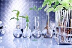 εργαστηριακά φυτά στοκ εικόνα με δικαίωμα ελεύθερης χρήσης