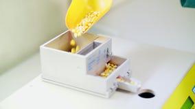 Εργαστηριακή έρευνα των σπόρων καλαμποκιού δείγματα των διαφορετικών ειδών, ποικιλίες του καλαμποκιού επιλογής εργαστήριο για απόθεμα βίντεο