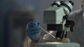 Εργαστηριακός βοηθός που ερευνά τη διαδίδοντας ταχύτητα των νέων βακτηριδίων φυλής απόθεμα βίντεο