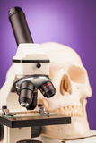 Εργαστηριακό μικροσκόπιο και ανθρώπινο scull Στοκ Εικόνες