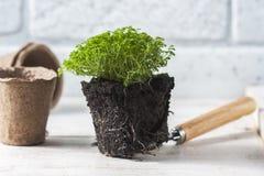 εργαλεία άνοιξη κήπων λουλουδιών Στοκ Φωτογραφίες
