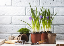 εργαλεία άνοιξη κήπων λουλουδιών Στοκ Φωτογραφία