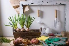 Εργαλεία κήπων και βολβοί λουλουδιών Στοκ εικόνες με δικαίωμα ελεύθερης χρήσης