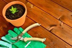 Εργαλεία και αντικείμενα κηπουρικής κινηματογραφήσεων σε πρώτο πλάνο στο παλαιό ξύλινο υπόβαθρο με το copyspace Στοκ Φωτογραφία