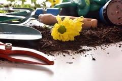 Εργαλεία κηπουρικής για τα δέντρα και εγκαταστάσεις στην άσπρη επιτραπέζια μακροεντολή Στοκ φωτογραφία με δικαίωμα ελεύθερης χρήσης