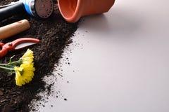 Εργαλεία κηπουρικής για τα δέντρα και εγκαταστάσεις στον άσπρο πίνακα που ανυψώνεται Στοκ Εικόνες