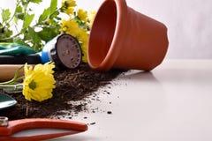 Εργαλεία κηπουρικής για τα δέντρα και εγκαταστάσεις στο άσπρο επιτραπέζιο μέτωπο Στοκ Φωτογραφία