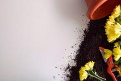 Εργαλεία κηπουρικής για τις εγκαταστάσεις στην άσπρη άποψη επιτραπέζιων κορυφών Στοκ Εικόνες