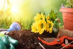 Εργαλεία κηπουρικής για το πράσινο OU υποβάθρου εγκαταστάσεων και λουλουδιών δέντρων Στοκ Εικόνες