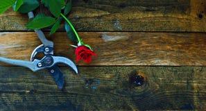 Εργαλεία κηπουρικής στους αγροτικούς ξύλινους πίνακες Στοκ Φωτογραφίες