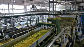 Εργοστάσιο για τα λαχανικά απόθεμα βίντεο