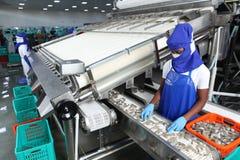 Εργοστάσιο επεξεργασίας γαρίδων τιγρών στοκ φωτογραφία