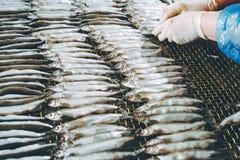 Εργοστάσιο θαλασσινών ψαριών Στοκ φωτογραφία με δικαίωμα ελεύθερης χρήσης