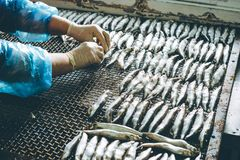 Εργοστάσιο θαλασσινών ψαριών Στοκ Φωτογραφία