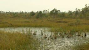 Εργοστάσιο νερού στην εθνική επιφύλαξη ελών Ημέρα φθινοπώρου Ομαλός μετακινηθείτε τον πυροβολισμό απόθεμα βίντεο