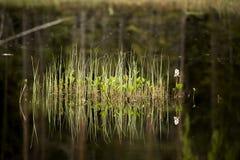 Εργοστάσιο νερού Στοκ εικόνες με δικαίωμα ελεύθερης χρήσης