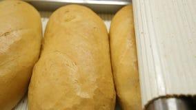Εργοστάσιο τροφίμων αρτοποιείων ψωμιού απόθεμα βίντεο