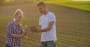 Ερευνητές με την ψηφιακή ταμπλέτα που αναλύει τις εγκαταστάσεις συναπόσπορων στο αγρόκτημα απόθεμα βίντεο