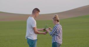 Ερευνητές που εξετάζουν τη νέα συγκομιδή στο αγρόκτημα απόθεμα βίντεο
