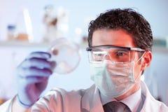 Ερευνητής βιολογικής επιστήμης που παρατηρεί τα κύτταρα petri στο πιάτο στοκ φωτογραφία