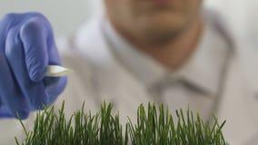 Ερευνητής εργαστηρίων που προσθέτει το λίπασμα στην τεχνητά βλαστημένη χλόη, πειράματα απόθεμα βίντεο