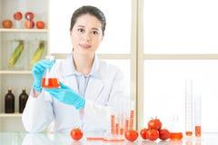 Ερευνητής και μικροσκόπιο με μια ντομάτα ΓΤΟ Στοκ Φωτογραφία