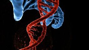 Ερευνητικό μόριο DNA τρισδιάστατη απεικόνιση Ανάλυση του ανθρώπινου γονιδιώματος δομών διανυσματική απεικόνιση