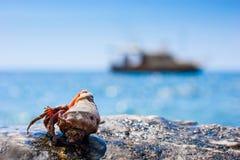 ερημίτης καβουριών Στοκ εικόνες με δικαίωμα ελεύθερης χρήσης
