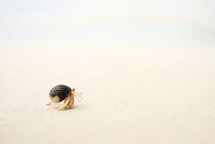 ερημίτης καβουριών Στοκ εικόνα με δικαίωμα ελεύθερης χρήσης