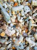 ερημίτης 4 καβουριών Στοκ φωτογραφία με δικαίωμα ελεύθερης χρήσης