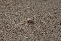 Ερημίτης crap - εικόνα αποθεμάτων Στοκ φωτογραφία με δικαίωμα ελεύθερης χρήσης