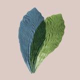 Ερμπάριο από το τροπικό φυτό του πιεσμένου και ξηρού φύλλου που επιβάλλεται ο ένας στον άλλο, η εργασία τέχνης Στοκ Εικόνες