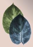 Ερμπάριο από το τροπικό φυτό του πιεσμένου και ξηρού φύλλου που επιβάλλεται ο ένας στον άλλο, η εργασία τέχνης Στοκ Φωτογραφία