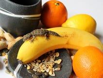 Ερπετά στα τρόφιμα - αρσενικό gecko fasciata Teratolepis στην μπανάνα, με τα φρούτα και τους σπόρους στοκ φωτογραφία με δικαίωμα ελεύθερης χρήσης