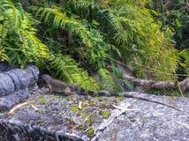 Ερπετό που καλύπτεται στον κήπο στοκ φωτογραφίες
