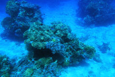 Ερυθρά Θάλασσα υποβρύχι&al Στοκ εικόνα με δικαίωμα ελεύθερης χρήσης