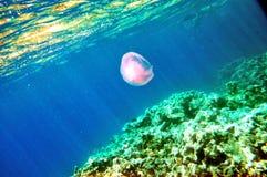 Ερυθρά Θάλασσα Στοκ φωτογραφία με δικαίωμα ελεύθερης χρήσης