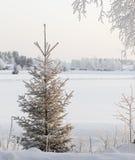 Ερυθρελάτες την ηλιόλουστη χιονώδη χειμερινή ημέρα Στοκ φωτογραφία με δικαίωμα ελεύθερης χρήσης
