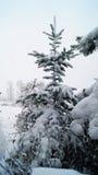 Ερυθρελάτες - christmastree Στοκ εικόνα με δικαίωμα ελεύθερης χρήσης