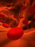 ερυθροκύτταρα Στοκ Εικόνες