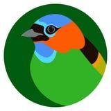 Ερυθρόλαιμη διανυσματική απεικόνιση πουλιών tanager επίπεδη ελεύθερη απεικόνιση δικαιώματος