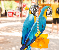 Ερυθρό Macaw, παπαγάλος Ara Μακάο Στοκ φωτογραφία με δικαίωμα ελεύθερης χρήσης