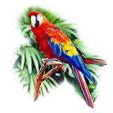 Ερυθρό Macaw Στοκ φωτογραφία με δικαίωμα ελεύθερης χρήσης